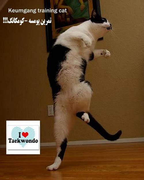 عکس طنز ورزشی حیوانات رزمی کار