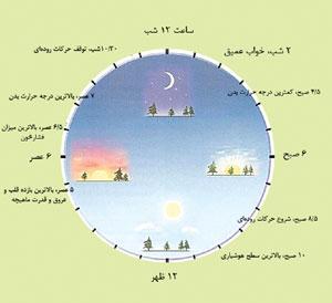 تاثیر ساعات مختلف خواب شب در سلامتی بدن